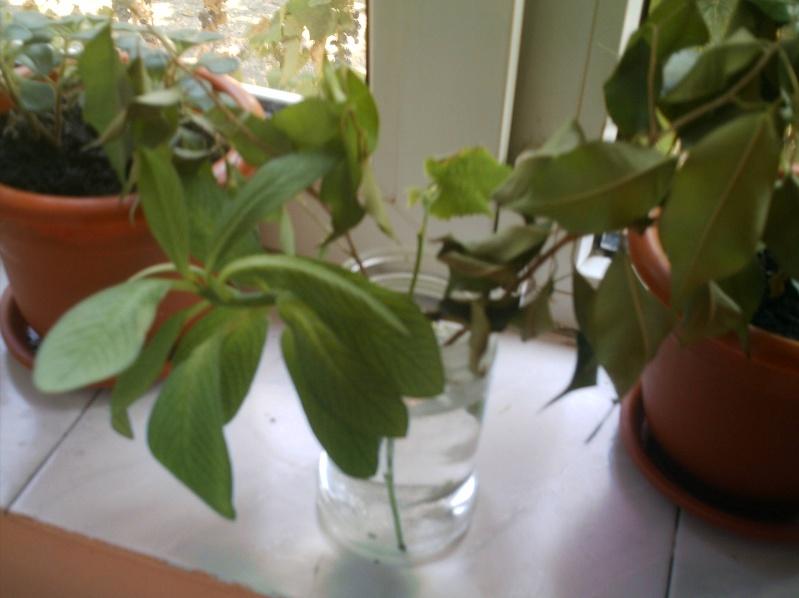 schimburi de plante , seminte...etc .. - Pagina 3 Imag0449
