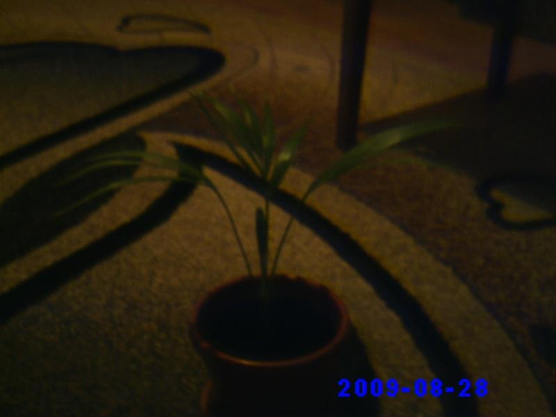 schimburi de plante , seminte...etc .. - Pagina 2 Pictur24