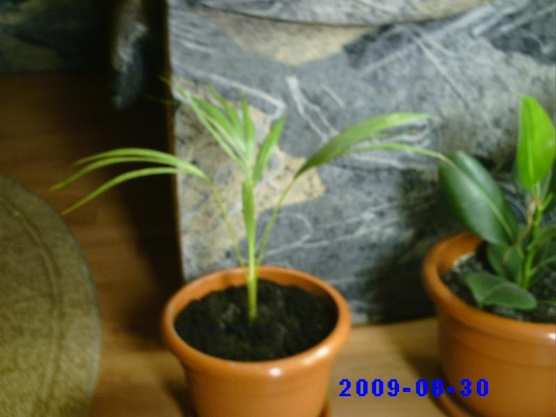 schimburi de plante , seminte...etc .. - Pagina 2 Pictur33