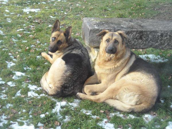 donne 2 chiens BA Bafa_011