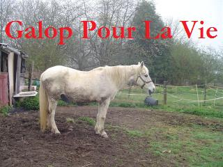 ARTHUR & AKIM - ONC poneys présumés nés en 1989 - adoptés en août 2009 par kalkita  Jumenn10