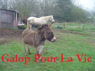 ARTHUR & AKIM - ONC poneys présumés nés en 1989 - adoptés en août 2009 par kalkita  Jumenn11