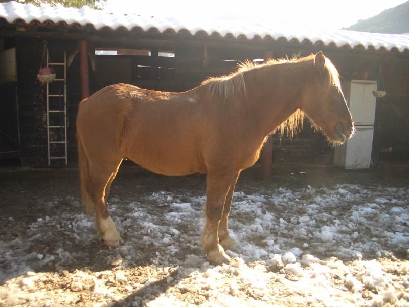 Limpieza y aseo en Aravalle (16-12-08) Imgp1310