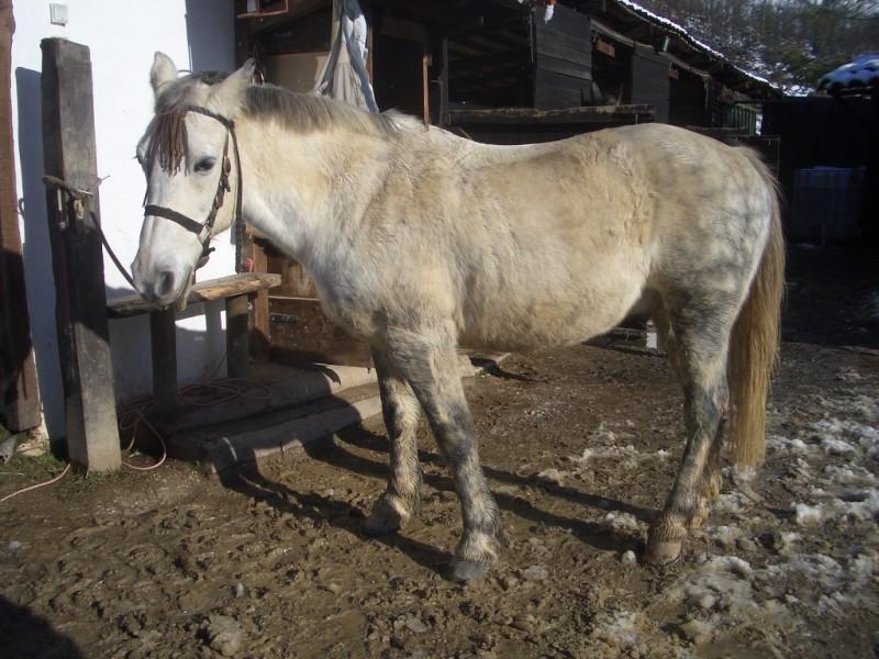Limpieza y aseo en Aravalle (16-12-08) Imgp1311