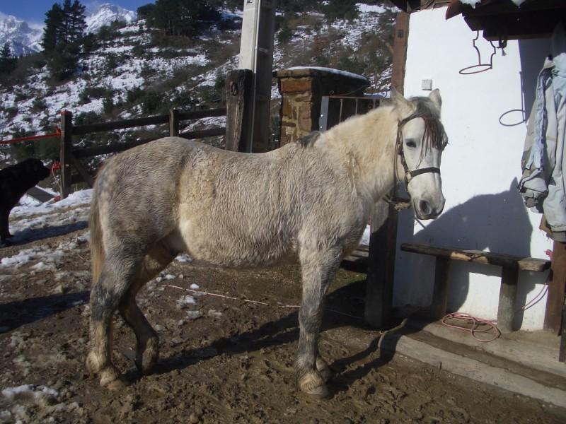 Limpieza y aseo en Aravalle (16-12-08) Imgp1313