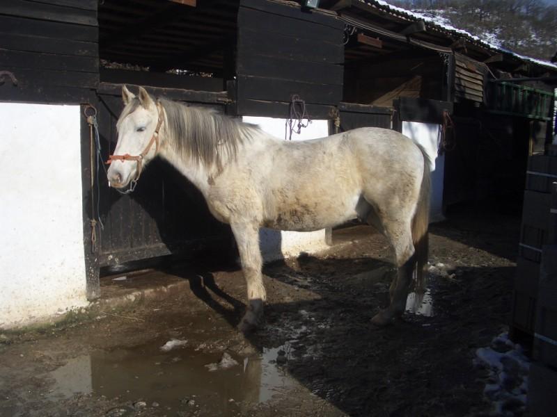 Limpieza y aseo en Aravalle (16-12-08) Imgp1314
