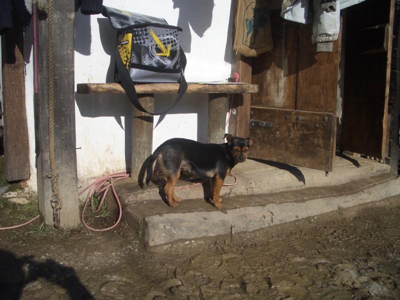Limpieza y aseo en Aravalle (16-12-08) Imgp1315