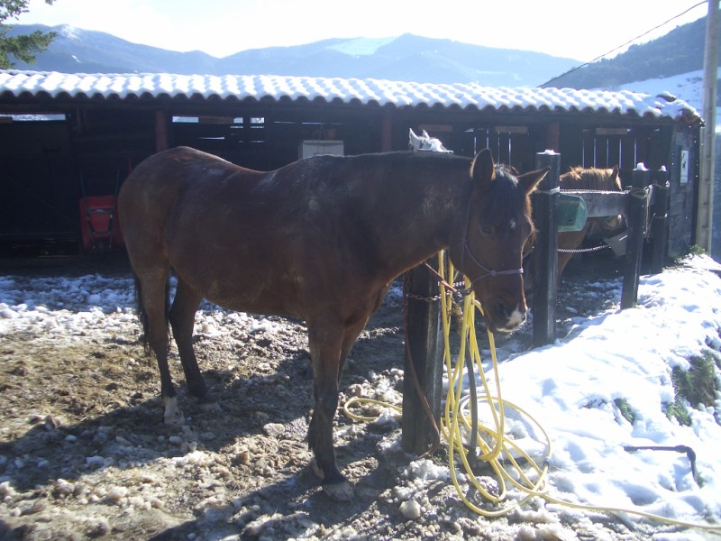 Limpieza y aseo en Aravalle (16-12-08) Imgp1316