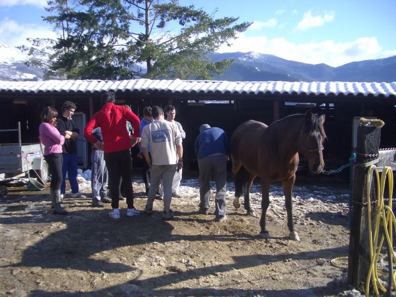 Limpieza y aseo en Aravalle (16-12-08) Imgp1317