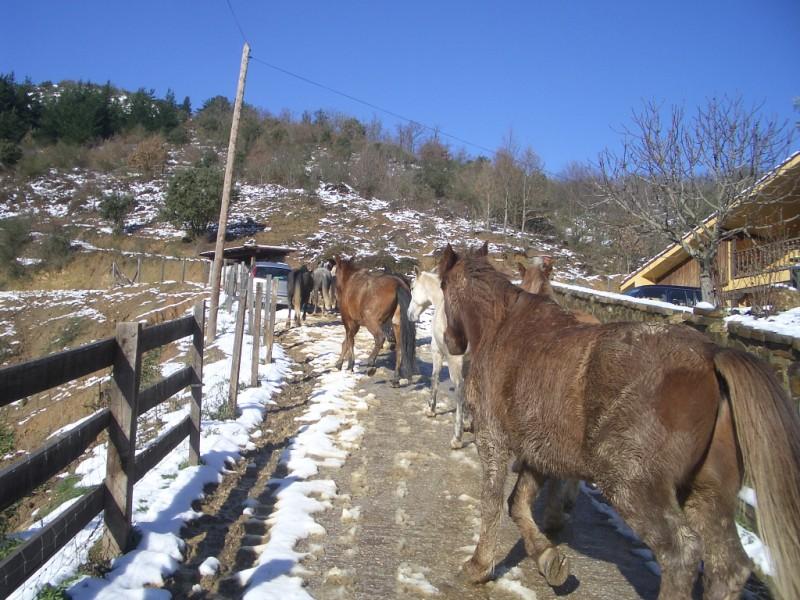 Limpieza y aseo en Aravalle (16-12-08) Imgp1320