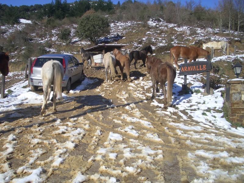 Limpieza y aseo en Aravalle (16-12-08) Imgp1321
