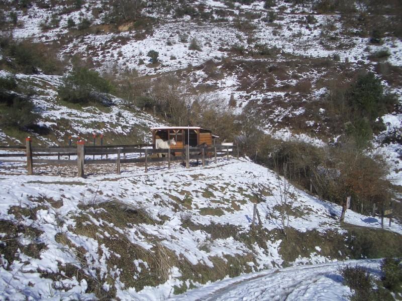 Limpieza y aseo en Aravalle (16-12-08) Imgp1323