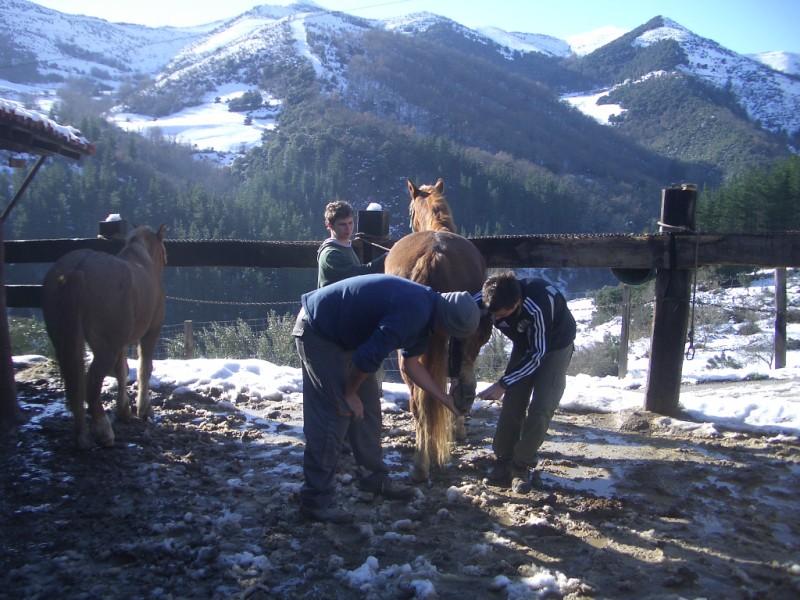 Limpieza y aseo en Aravalle (16-12-08) Imgp1324