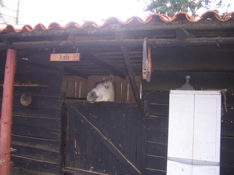 Visita a Aravalle en Navidades (Diciembre 2008) Imgp1346