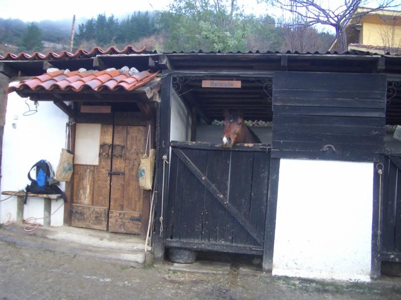 Visita a Aravalle en Navidades (Diciembre 2008) Imgp1347