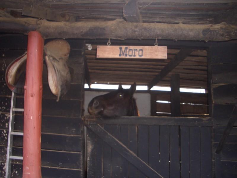 Visita a Aravalle en Navidades (Diciembre 2008) Imgp1349