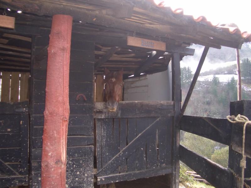 Visita a Aravalle en Navidades (Diciembre 2008) Imgp1351
