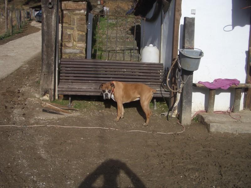 Visita a Aravalle en Navidades (Diciembre 2008) Imgp1357