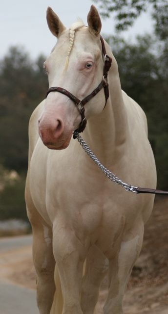 Wildfire Wants to be Bred The20m11