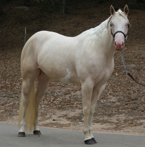 Wildfire Wants to be Bred The20m12