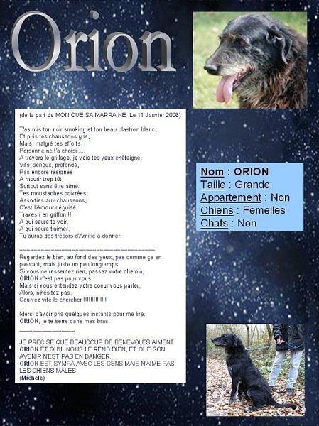 Orion, Mâle xgriffon, 9 ans dont 5 ans spa Orgeval (92) Affich11