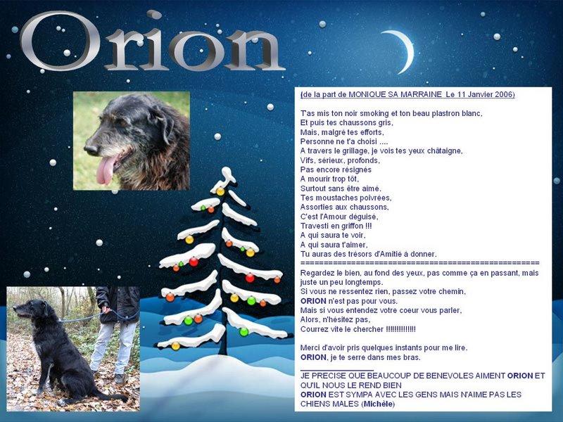 Orion, Mâle xgriffon, 9 ans dont 5 ans spa Orgeval (92) Orion110