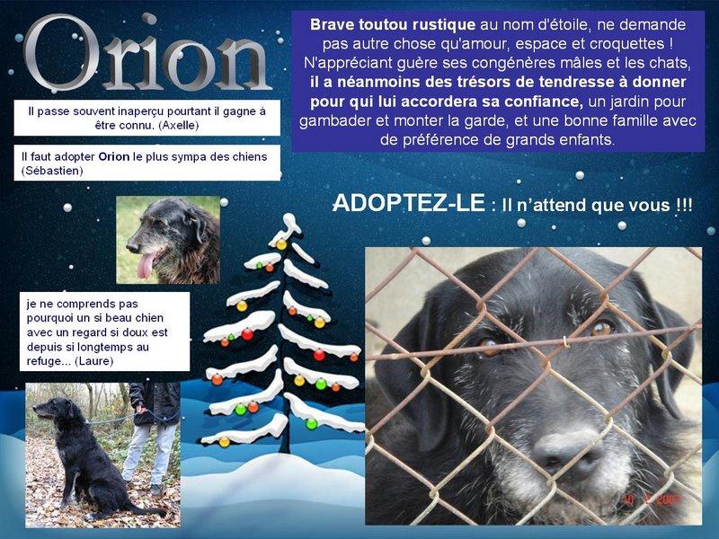 Orion, Mâle xgriffon, 9 ans dont 5 ans spa Orgeval (92) Orion210