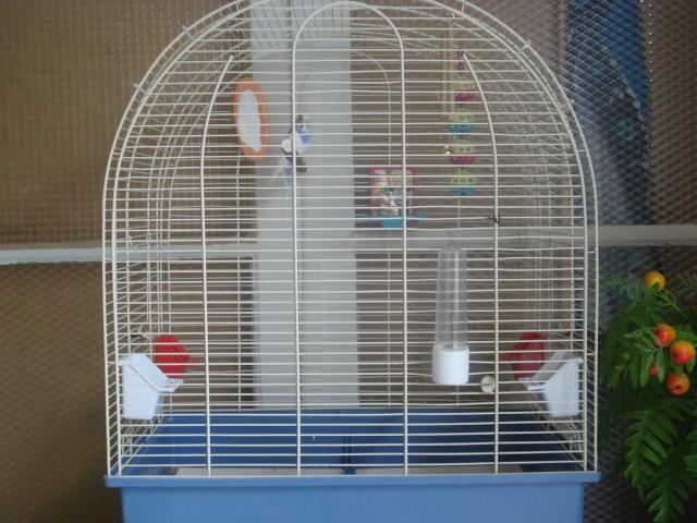 Ma nouvelle cage Dsc00312
