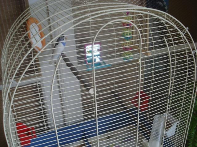 Ma nouvelle cage Dsc00313