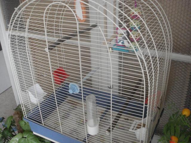 Ma nouvelle cage Dsc00314
