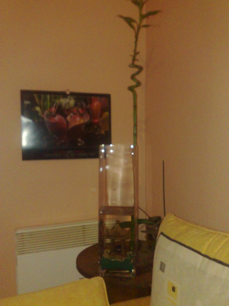 un copain pour mon bambou 12112010