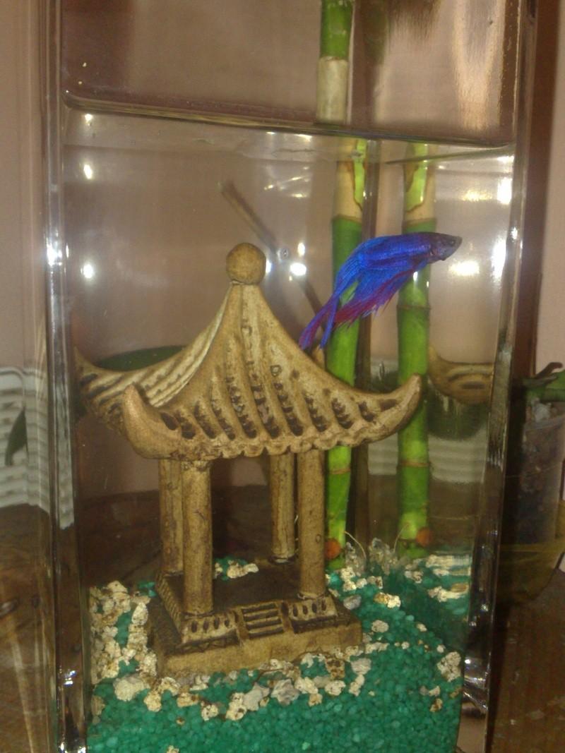 un copain pour mon bambou 12112011