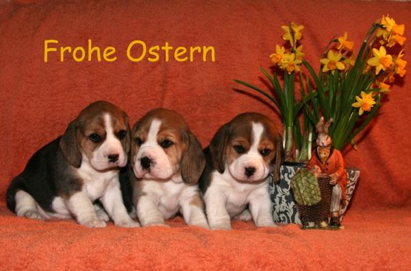 Eure hübschesten Osterhäschen, Fotos, Grüße etc. :-) - Seite 2 Beagle10