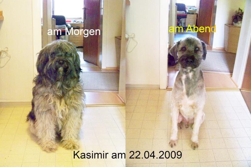 Unsere Tierchens - Seite 2 Kasi2010