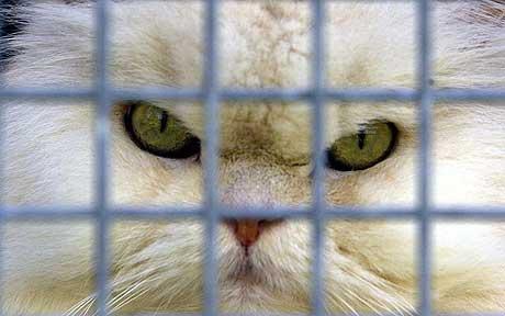 Races par sélection humaine souffrant de maladies mortelles et de deformations!!! Cat4_110