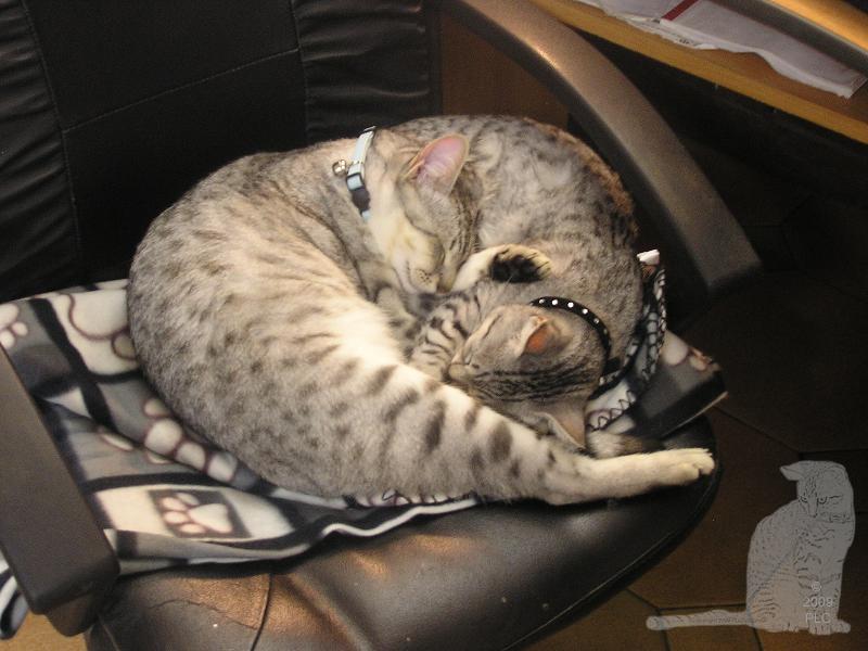 E'Sethi Accuente, le chaton voyageur Img_0020