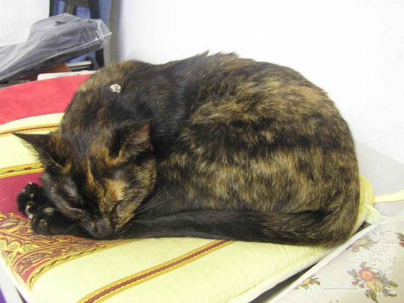 E'Sethi Accuente, le chaton voyageur Img_0021