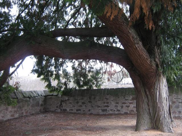 De l'autre côté du mur...du cimetière de Wangen Img_0335