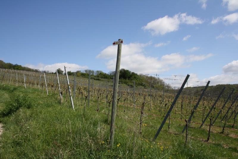 viticole - Wangen et son sentier viticole Img_0718
