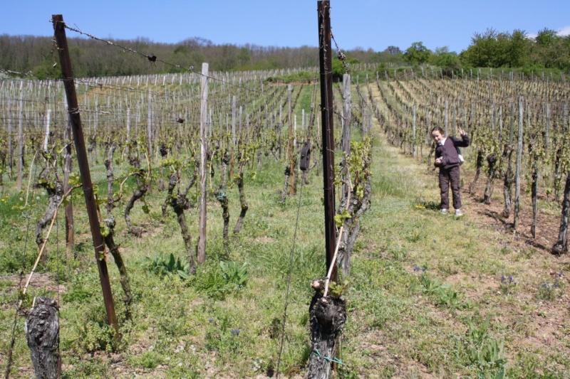 viticole - Wangen et son sentier viticole Img_0720