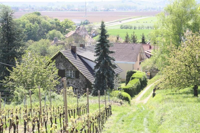 viticole - Wangen et son sentier viticole Img_0722