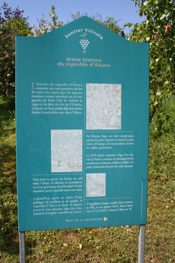 viticole - Wangen et son sentier viticole Img_0818