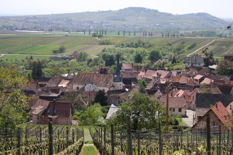viticole - Wangen et son sentier viticole Img_0826