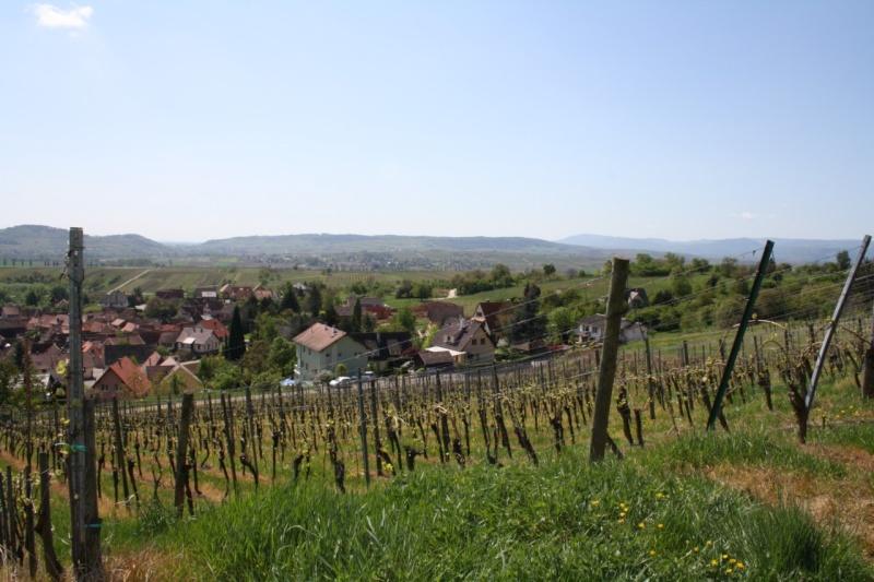 viticole - Wangen et son sentier viticole Img_0827