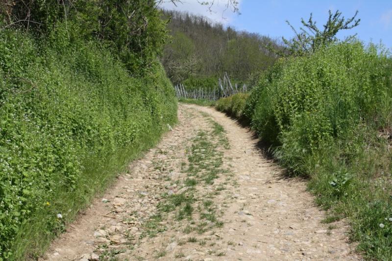 viticole - Wangen et son sentier viticole Img_0830