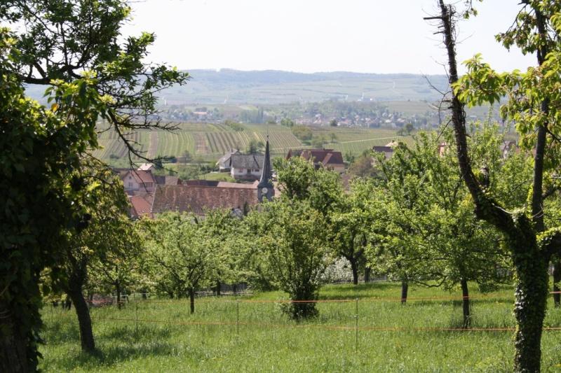 viticole - Wangen et son sentier viticole Img_0834