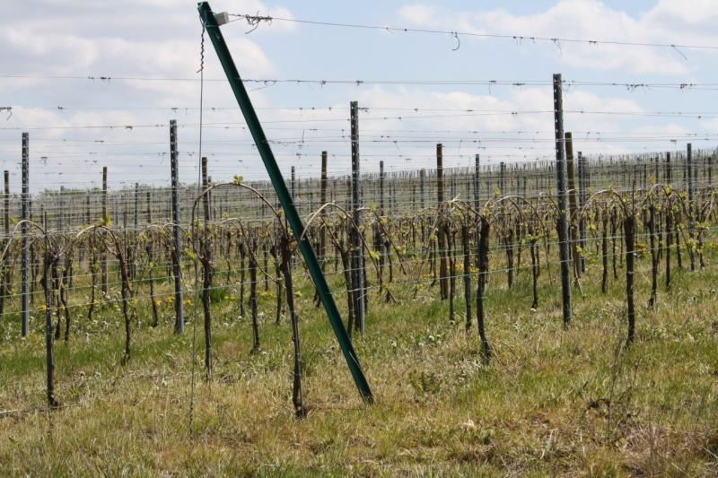 viticole - Wangen et son sentier viticole Img_0840