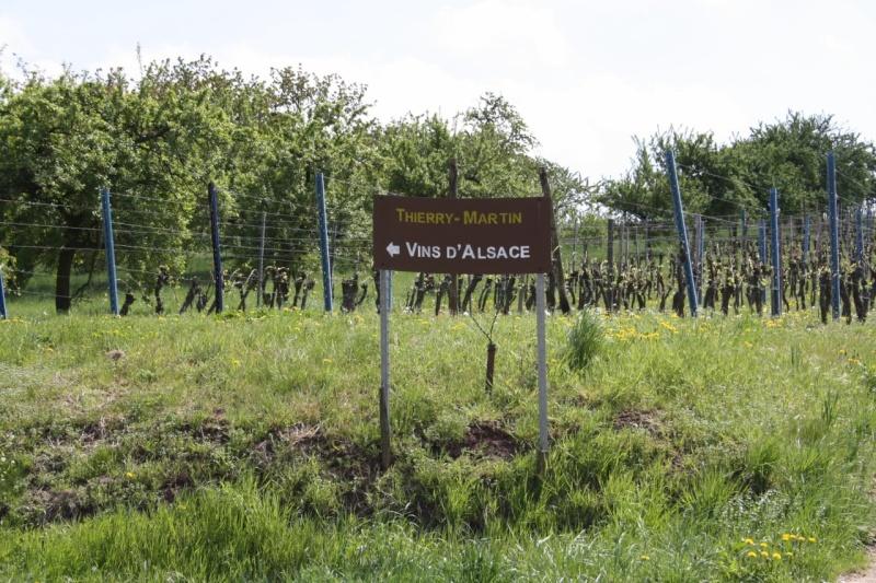 viticole - Wangen et son sentier viticole Img_0841