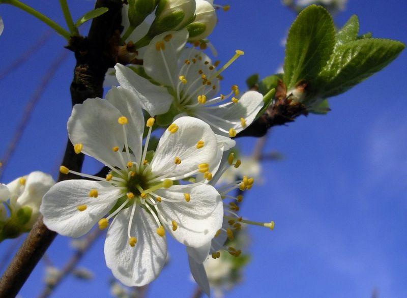 le printemps s'en vient Imgp0710