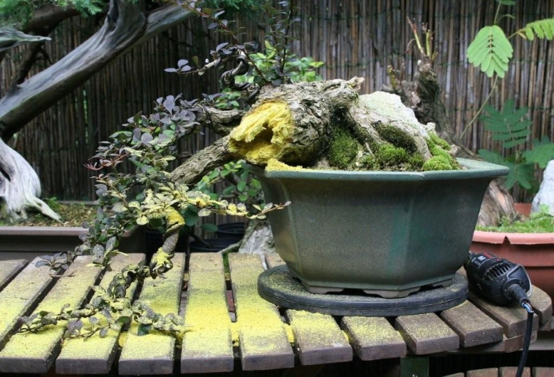 Berberis cascade styling Img_5910